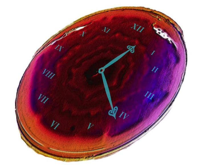 Укишечных бактерий есть свои биологические часы— Ученые